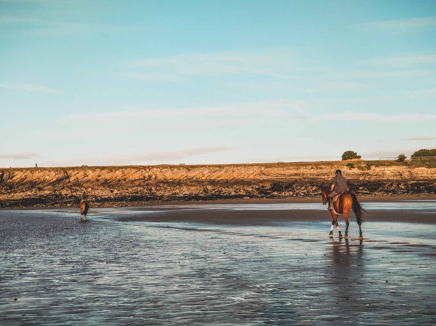Two horses galloping along the sand